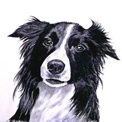 EmilyJane Border Collie Art artwork dogs animals for-him for-her personalised online greeting card