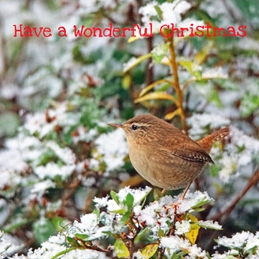 Christmas Wren snow personalised online greeting card