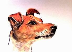 General dog animals pet  for-him for-her personalised online greeting card