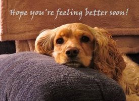 Get well Get Well Soon Feel Better Poorly Ill Spaniel Dog personalised online greeting card