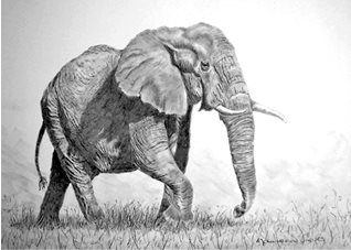 General artwork elephant animals zoo for-her for-him personalised online greeting card