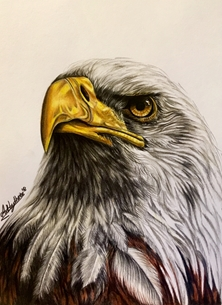 Art By Three  Bald Eagle  personalised online greeting card