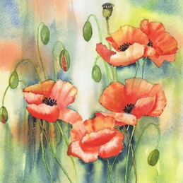 General poppies, wild flower, flower, red, bright, poppy personalised online greeting card