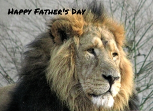 Fathers lions, animals, wild, fur, mane, personalised online greeting card