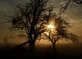 Photography Sunrise, Trees, Bushy Park personalised online greeting card