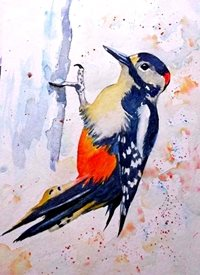 Art artwork woodpecker birds wildlife for-her for-him personalised online greeting card
