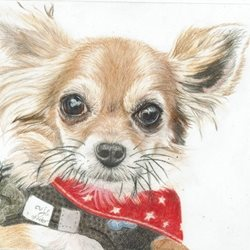 Art General Chihuahua personalised online greeting card