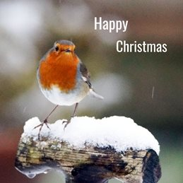 christmas personalised online greeting card