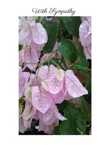 sympathy weather rain flowers pink bougainvilia  personalised online greeting card