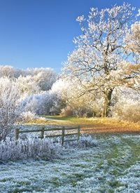 Photography winter frost snow landscape  trees cold General Chrtistmas z%a personalised online greeting card