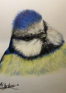 Art Birds Blue tits spring  cute blue yellow wildlife gardens animals nature her mums aunts sisters all occasions thanks for-him for-her  personalised online greeting card