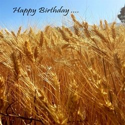 Birthday Photography  sunshine love peace  nature blue sky wheat crops  z%a personalised online greeting card