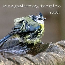 Birthday Blue Tit Bath personalised online greeting card