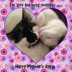 Mothers love mum mother parent cuddle sweet cute animal cat personalised online greeting card