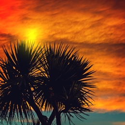 Photography sunset, tropical, for-him, for-her, tranquil, bon-voyage, holiday, palm-trees, adventure, photograph, blank personalised online greeting card