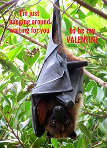 Valentine Valentines fruit bats animals mammals wings hanging for-her for-him personalised online greeting card