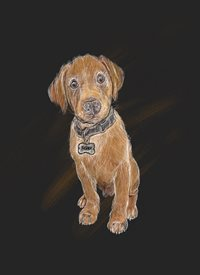 Thelesserknownartist Jasper art dogs animals  z%a personalised online greeting card