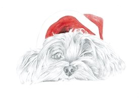 Christmas puppy, terrier, dog, animal, santa, christmas, graphite pencil, fine art, illustration personalised online greeting card