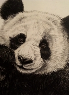 Art By Three  Giant Panda  Art Giant pandas bears for-her for-kids animals wildlife  personalised online greeting card