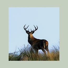 photography Stag Deer personalised online greeting card