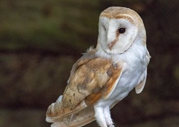 Photography Birthday Father's Day Barn Owl, bird, nature, wildlife, birds, photography for-him for-her for-child personalised online greeting card