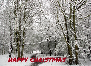 Christmas woods snow Belmont Surrey trees branches personalised online greeting card