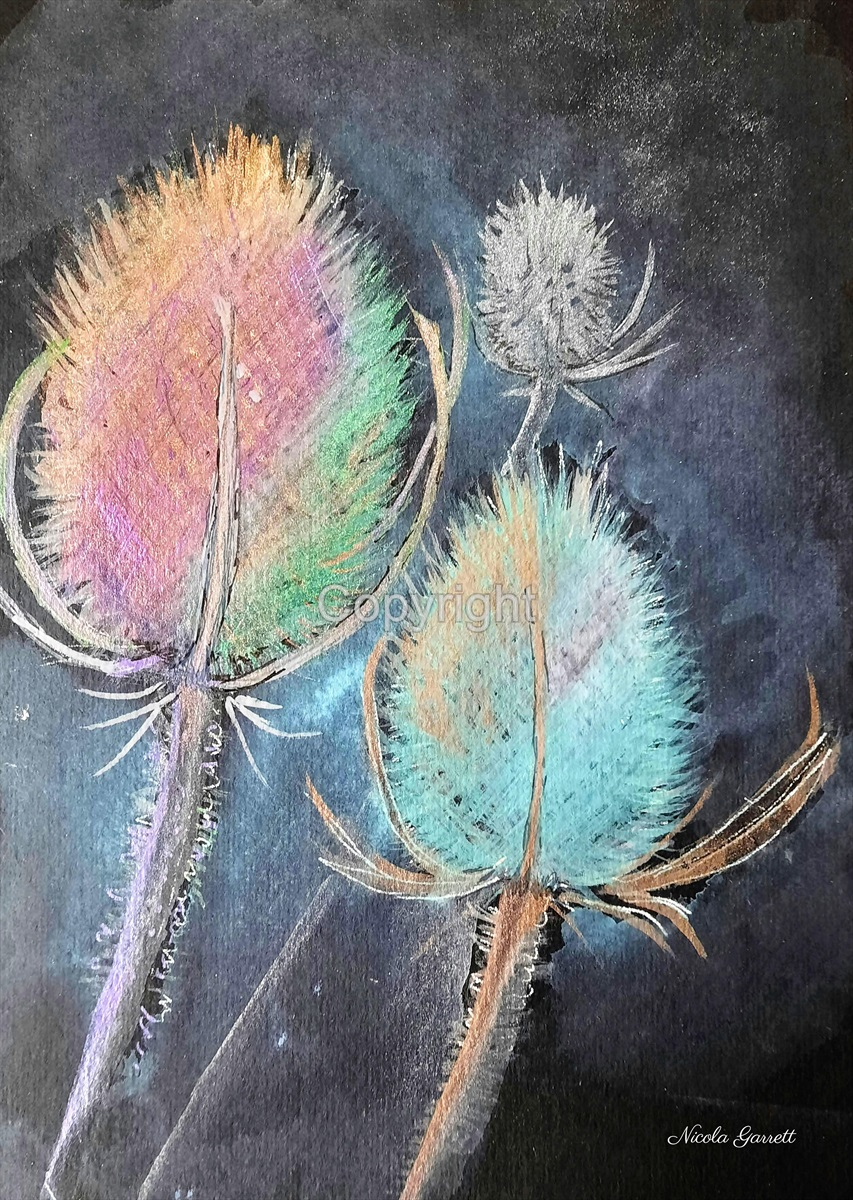 Colourful Teasels